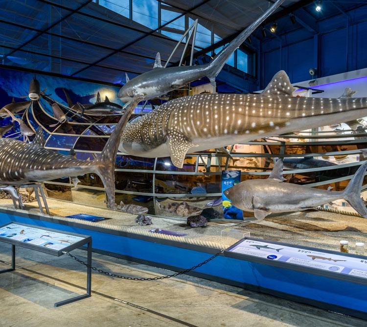 제주해양동물박물관