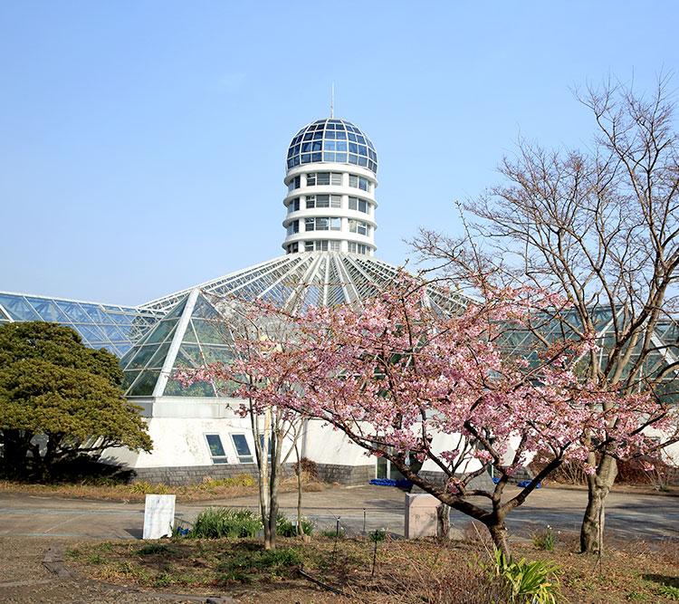 여미지식물원+카멜리아힐