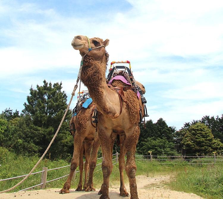 낙타트래킹+여미지식물원