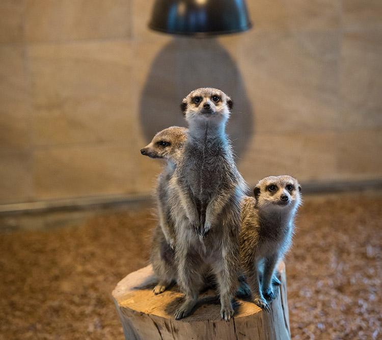 더마파크 동물원 라온ZOO